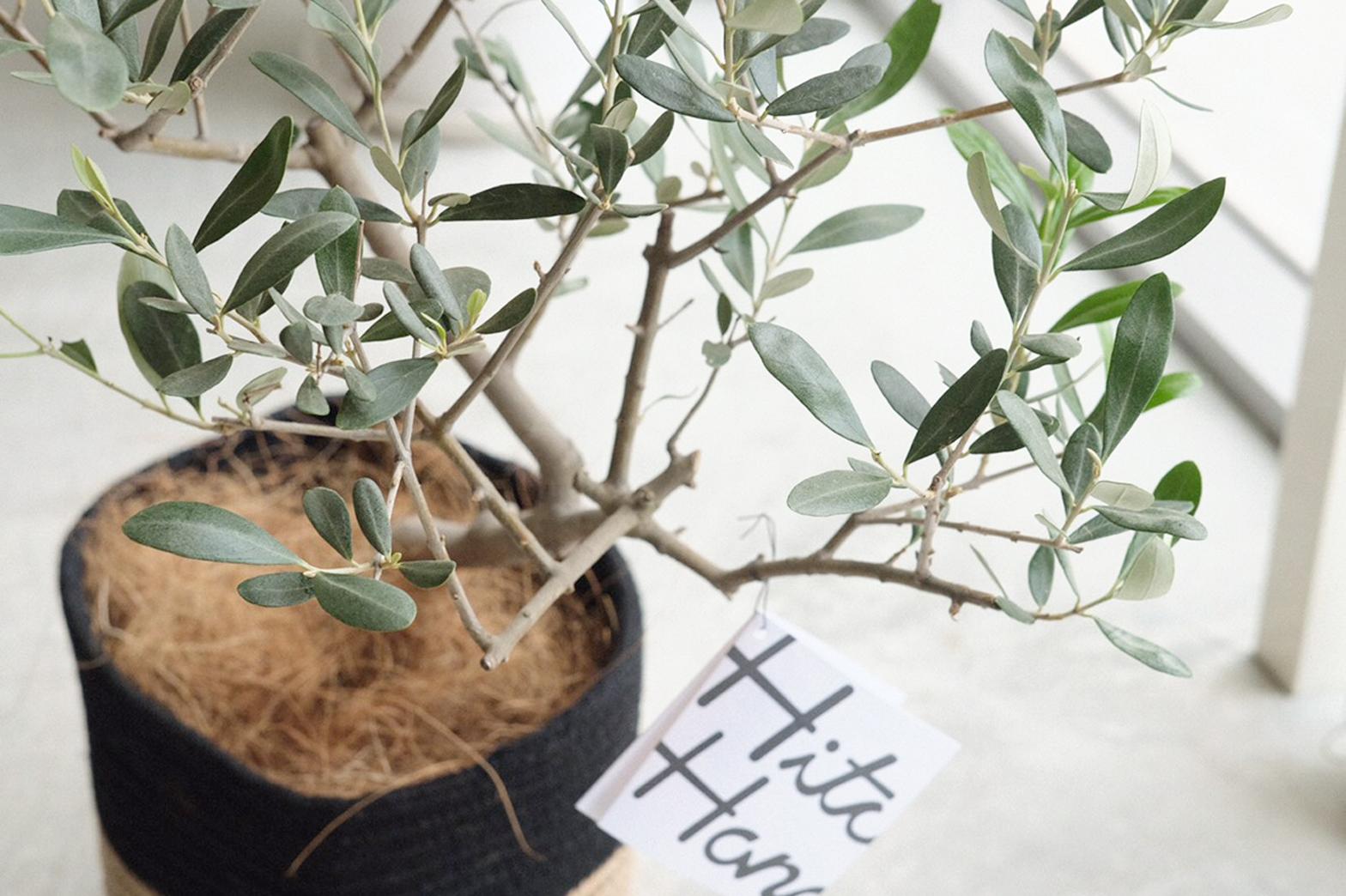 Olive〈オリーブ〉 vol.2