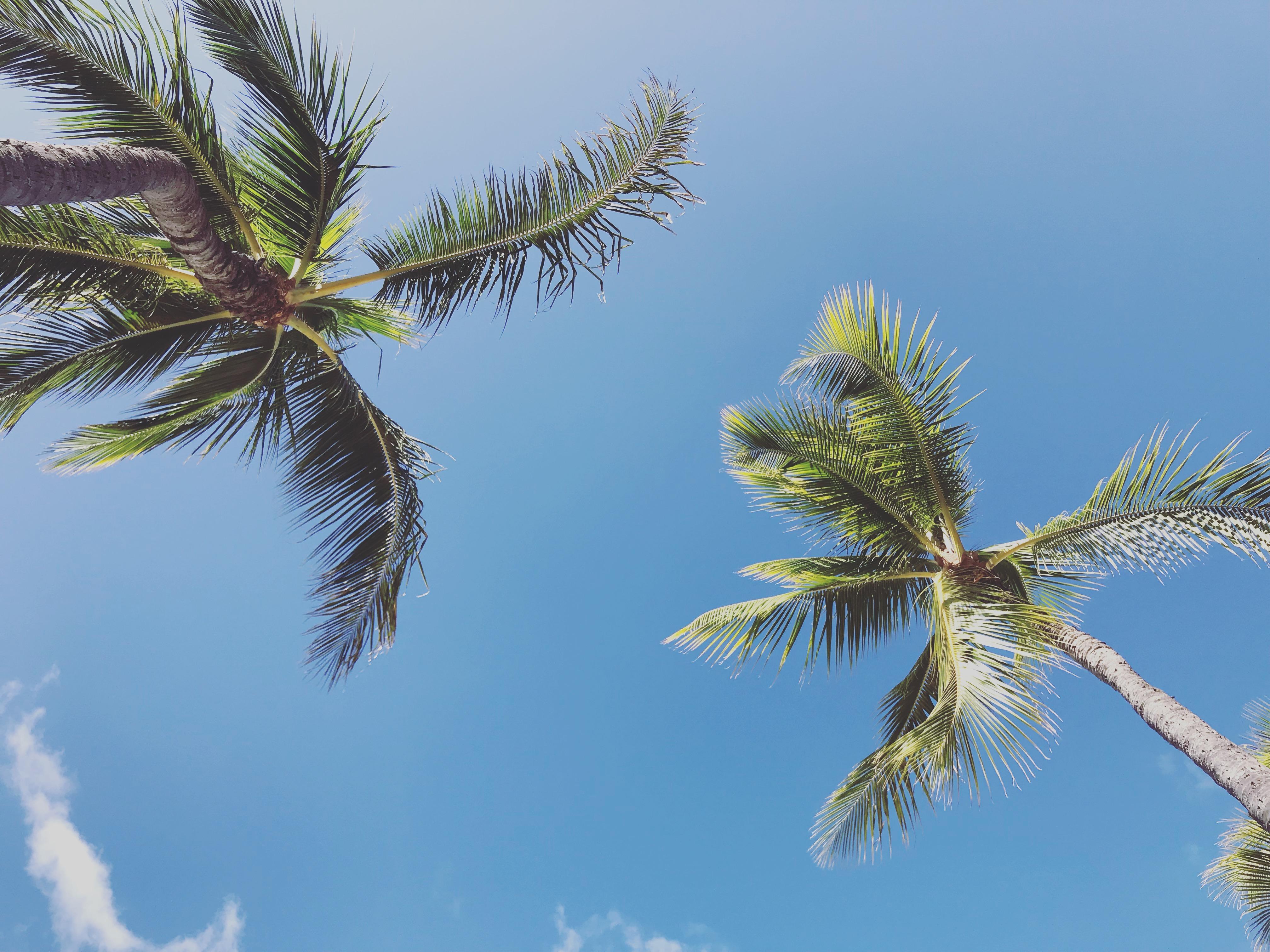 SHEA Hawaii 〜心地よい暮らしと髪と人〜           OPEN