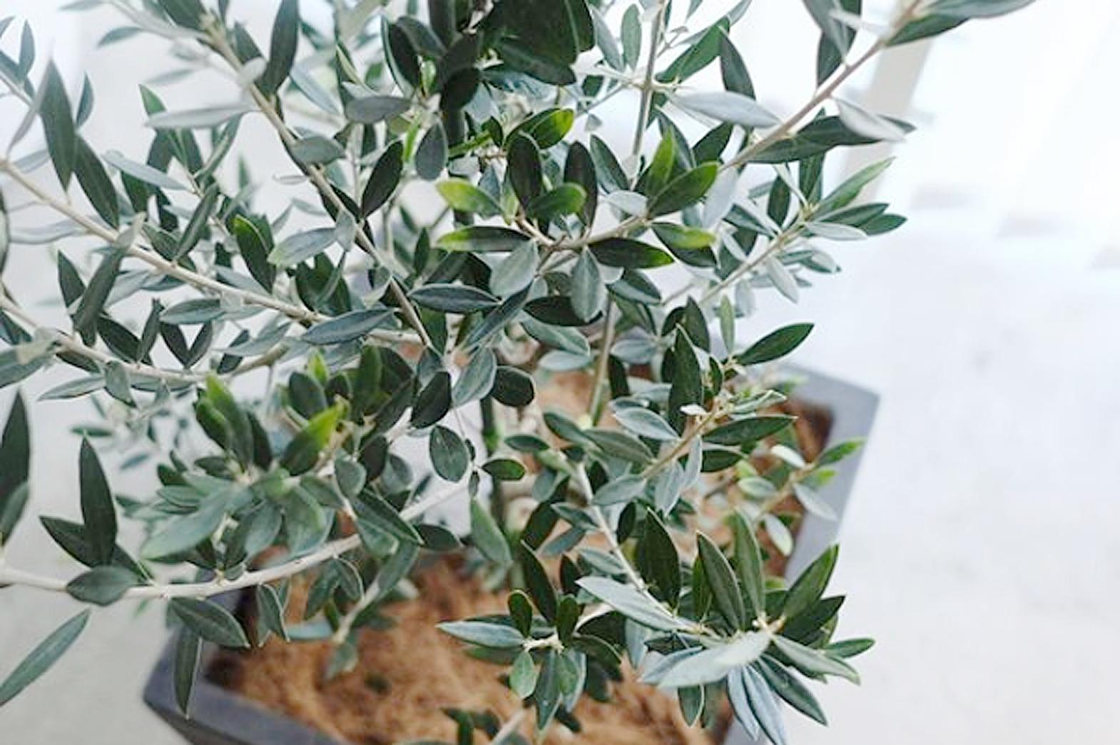 Olive〈オリーブ〉 vol.3