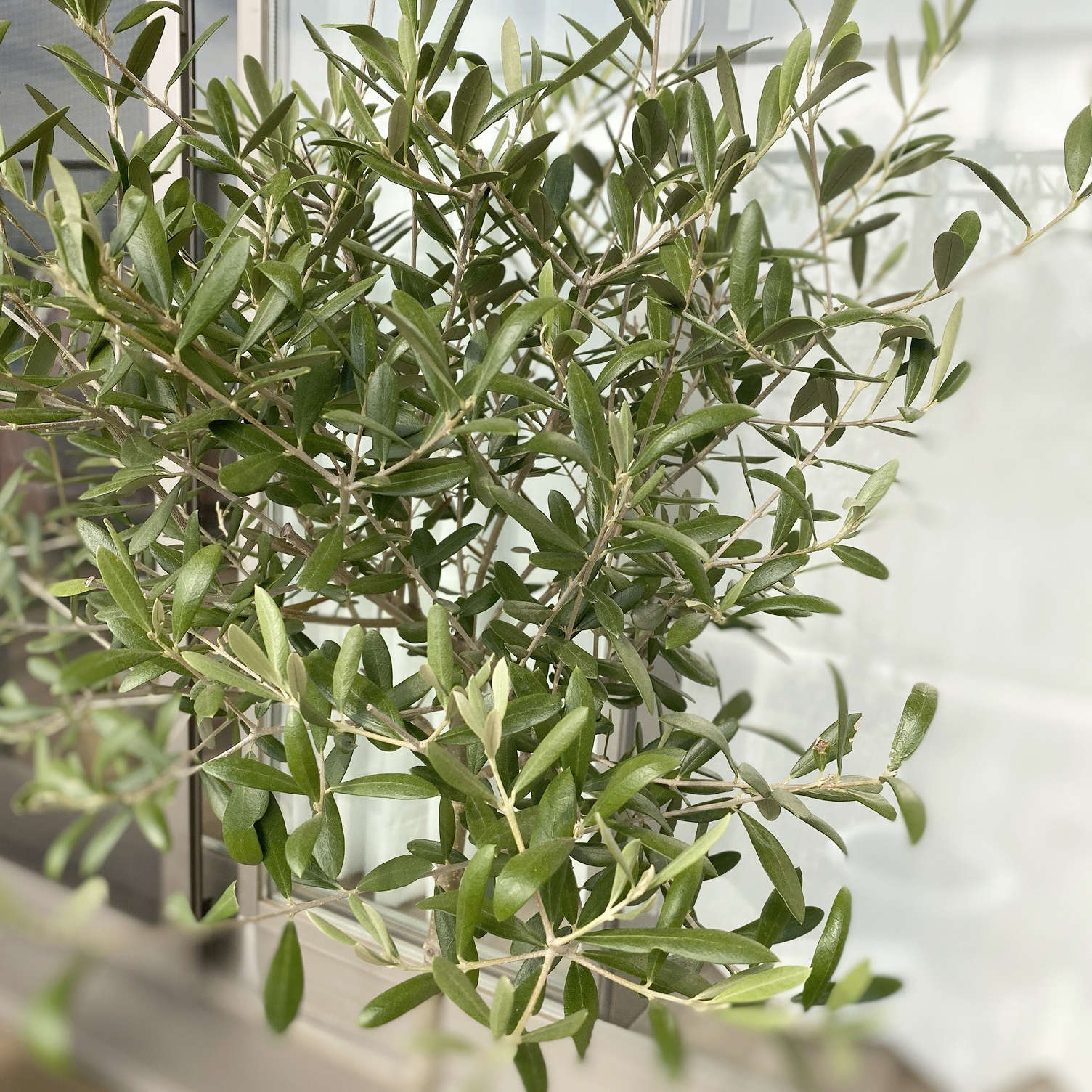 Olive〈オリーブ〉 vol.5